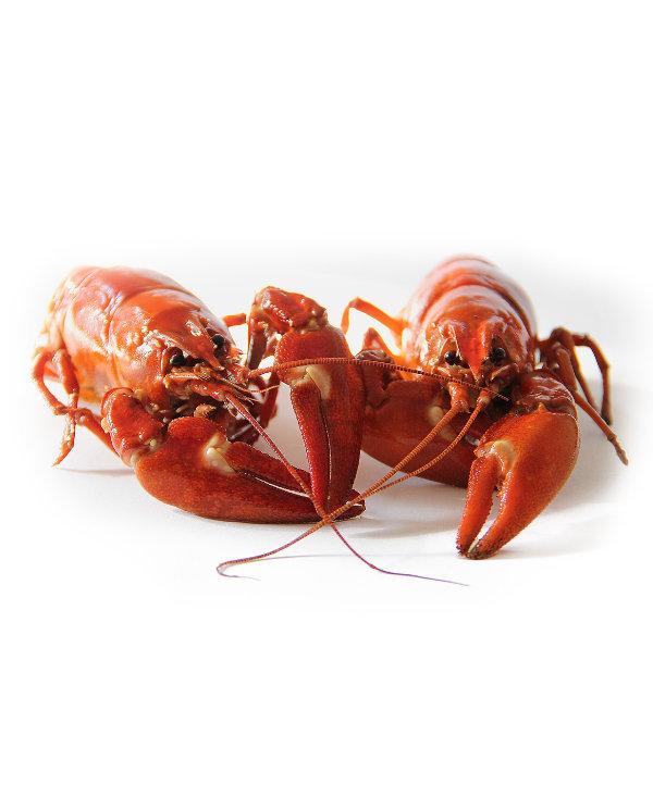 Ellis and Jones Fishmongers - Lobster