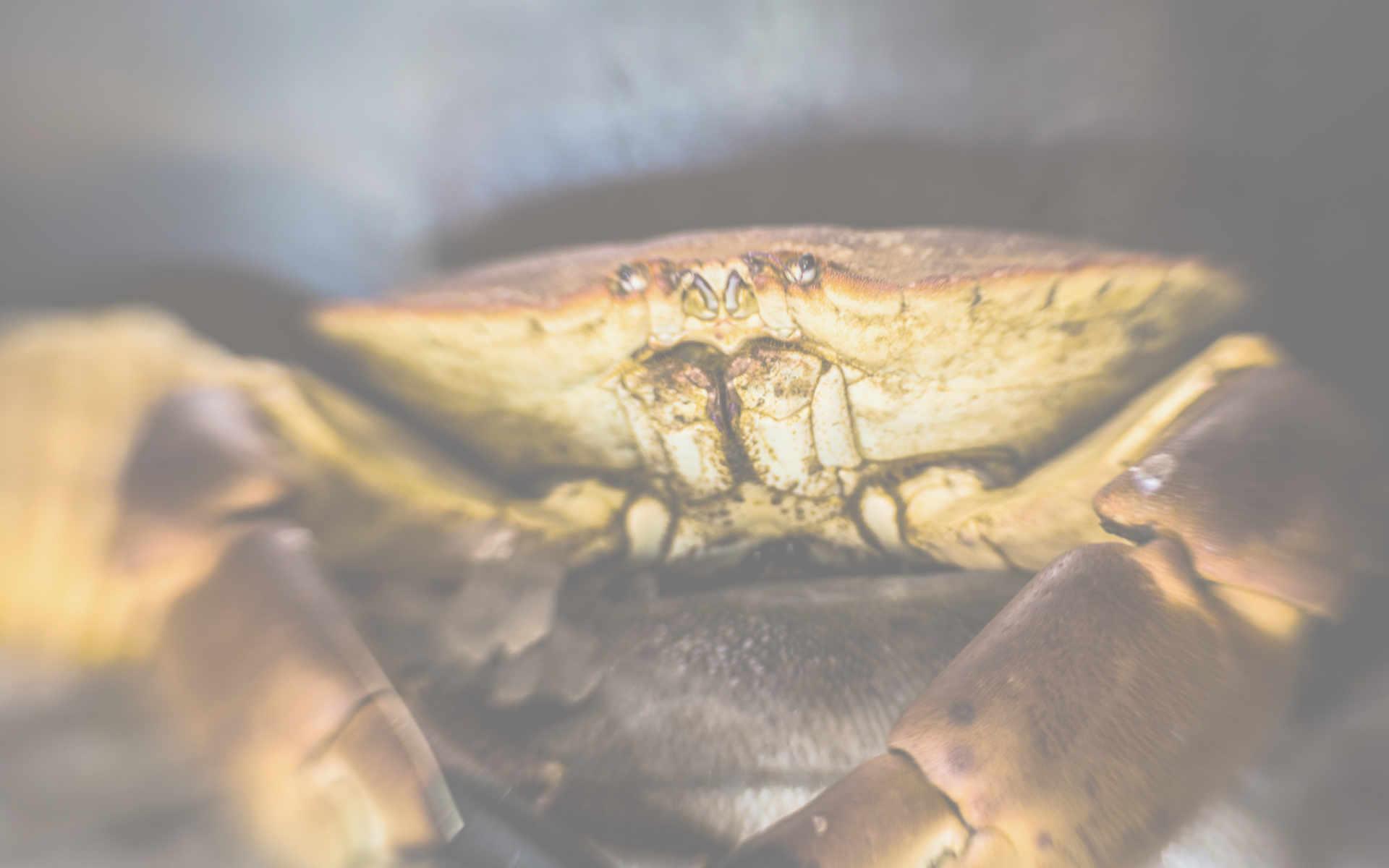 Shellfish Greenwich Fishmongers